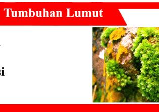 Tanaman-Lumut-Sifat-Siklus-Hidup-Reproduksi-klasifikasi